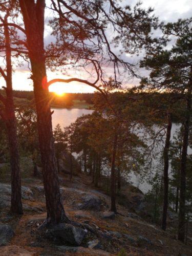 Stockholm Forest