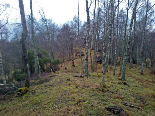 Balliefurth Wooded Ridge